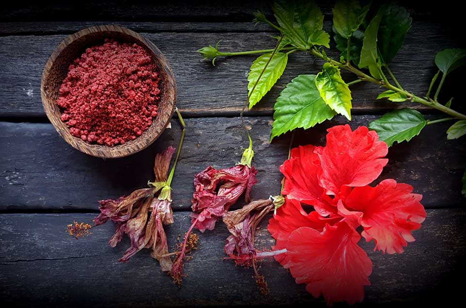 Hibiscus as a Beauty Aid: 7 Tips & Tricks