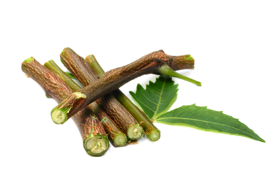 5 Ayurvedic Datoon (Twigs) For Healthy Teeth and Gums