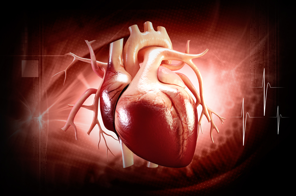 Understanding your Heart and its Diseases