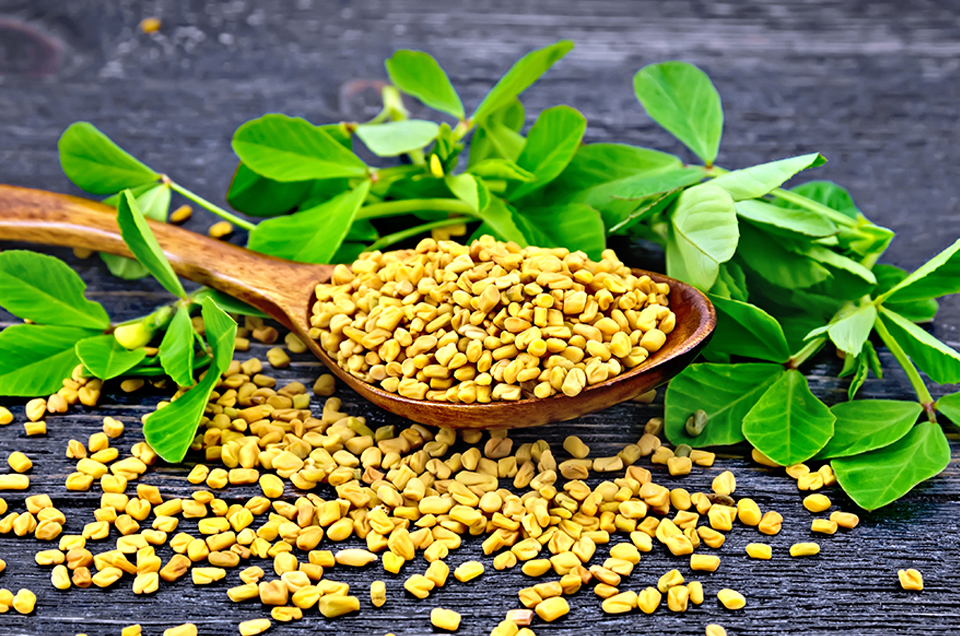 Why Fenugreek Seeds are Good for Diabetes?